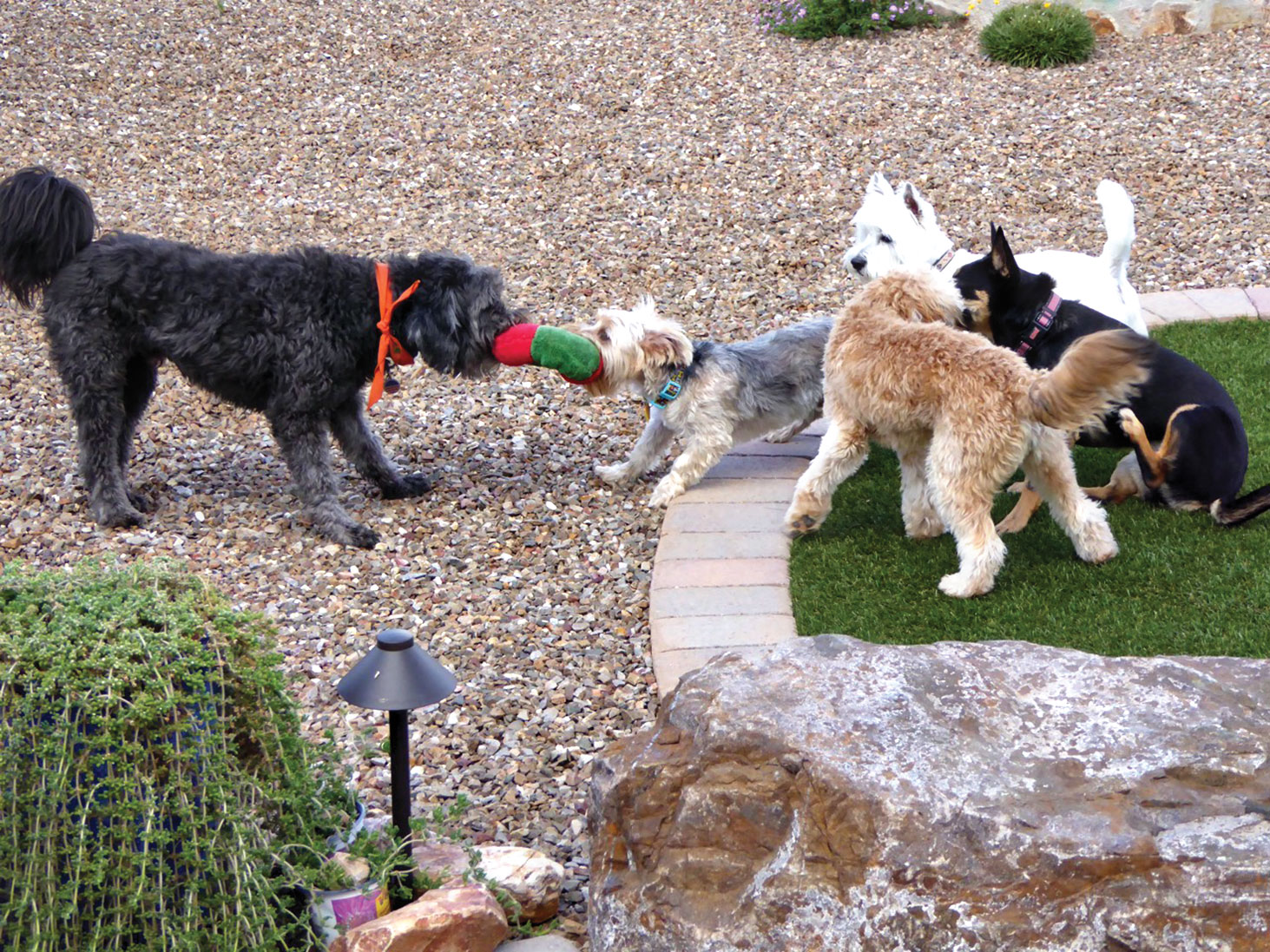 Dogs left to right: Sig, Scupper, Rocky, Abigale and Kona