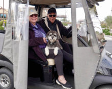 Dog being chauffeured.