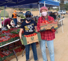 Liese Razzeto of SaddleBrooke Ranch and Linda Leigh of Oracle Learning Garden prepare produce for distribution.
