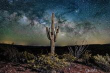 Bob Hills: Lonesome Saguaro Sunset