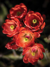 Kathryn Watson: Desert Flowers2